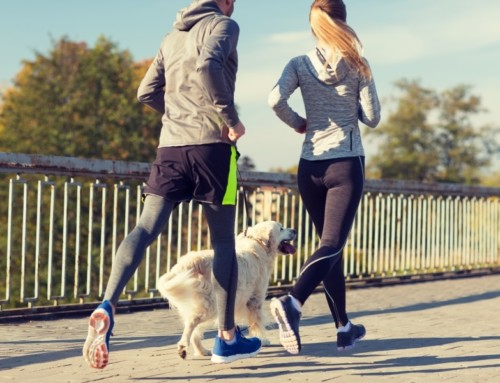 Shake up Your Exercise Routine with Your Dog